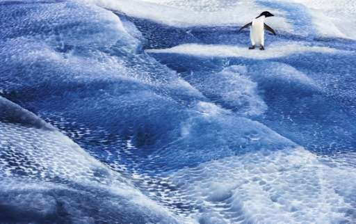 Efforts to create marine sanctuaries in Antarctica have been shot down five times at annual Commission for the Conservation of A