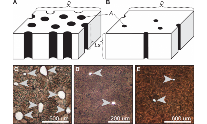 Eggshell porosity can be used to infer the type of nest built by extinct archosaurs
