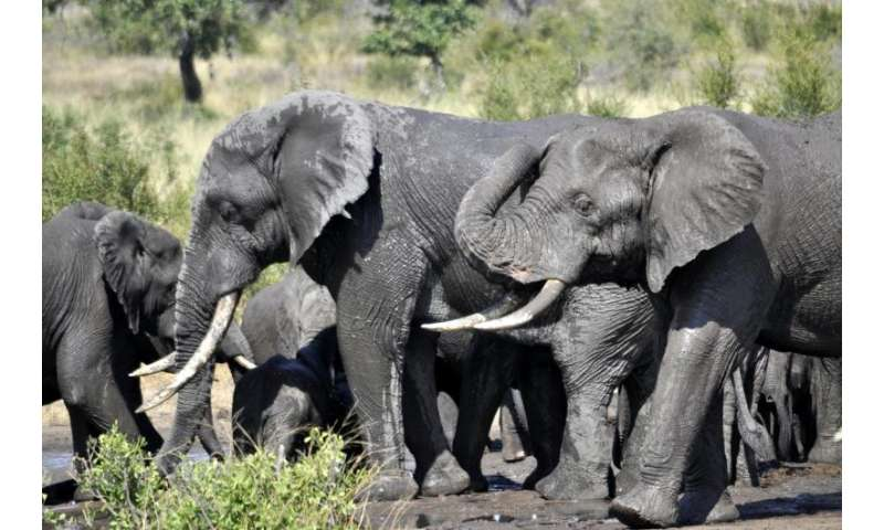 Elephants boost tree losses in South Africa's largest savanna reserve