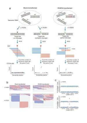End of CRISPR-CAS9 controversy