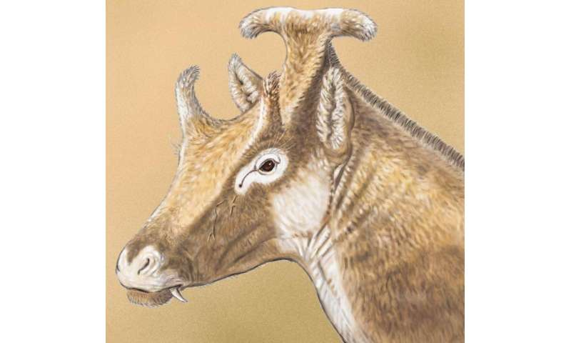 Extinct 3-horned palaeomerycid ruminant found in Spain