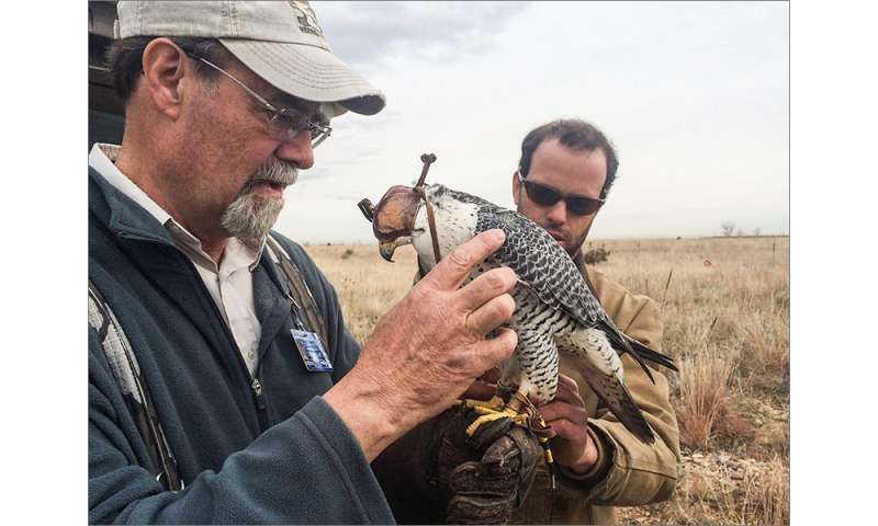 Falcon teaches a radar system to distinguish birds from other targets