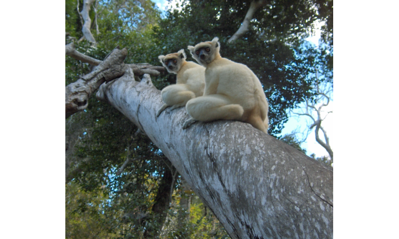 Family ties: Social structure matters in species conservation