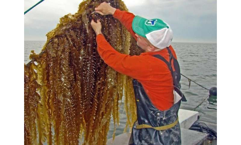 Farming the sea: Prize-winning model to restore ecosystems
