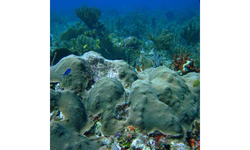 Fat makes coral fit to cope with climate change