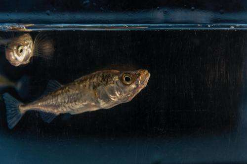 Female sticklebacks prime their offspring to cope with climate change
