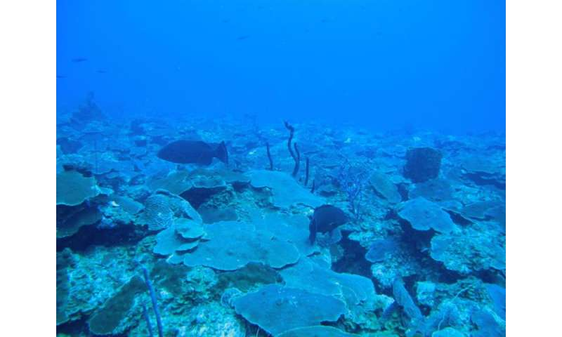 Fertile corals discovered in deeper waters off US Virgin Islands