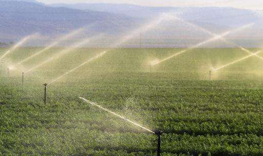 Fields of carrots are watered near where the California Aqueduct flows through Kern County, some twenty five miles south of Bake