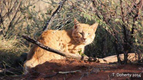 Field tests needed to help control feral cats