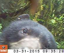 First glimpse of rare Peruvian animals revealed in extraordinary camera trap footage