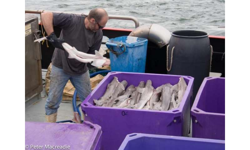 Fishes' large carbon footprints to be included in seafood eco-labeling