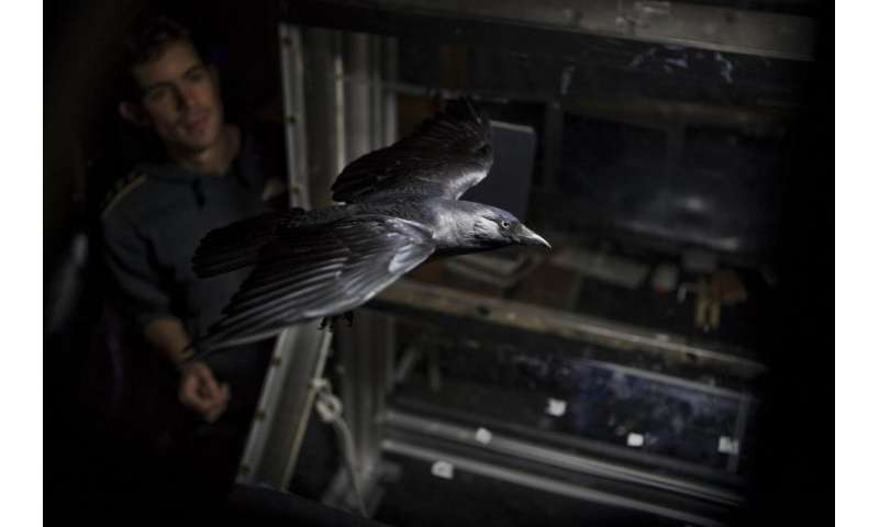 Flying without wings: Losing feathers has a detrimental effect on migrating birds