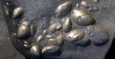 Fossils used to predict impact of global warming on marine life