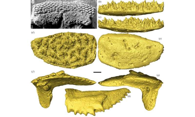 Four hundred million year old fish fossil has earliest example of teeth