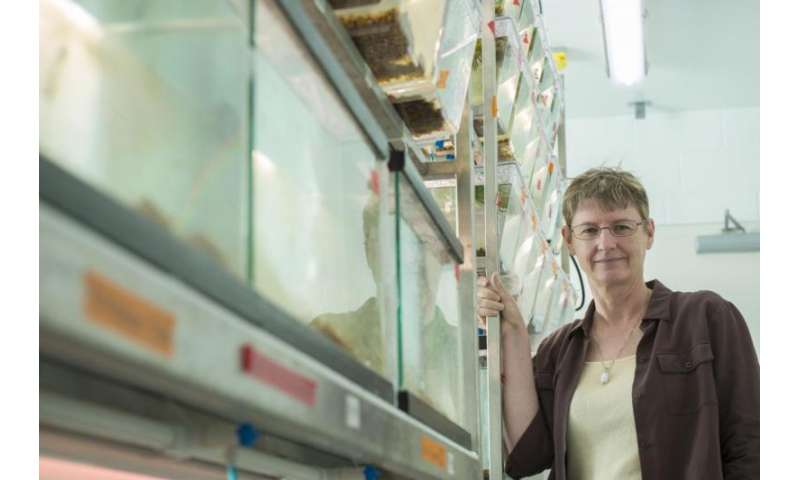 FSU researcher: Change in environment can lead to rapid evolution