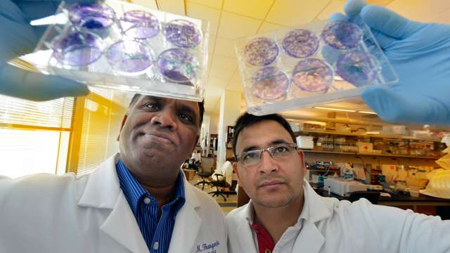 Gene found that is essential to maintaining breast and cancer stem cells