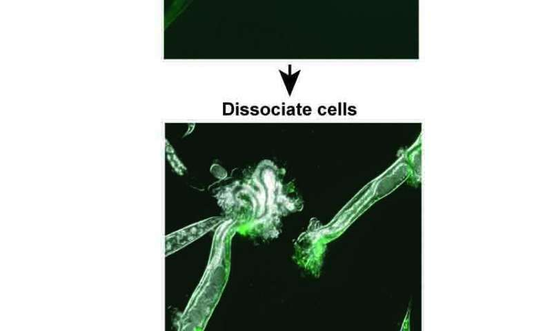 Genes for age-related cognitive decline found in adult worm neurons