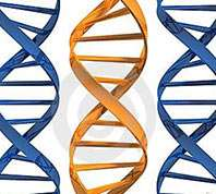 Genome replication may hold clues to cancer evolution
