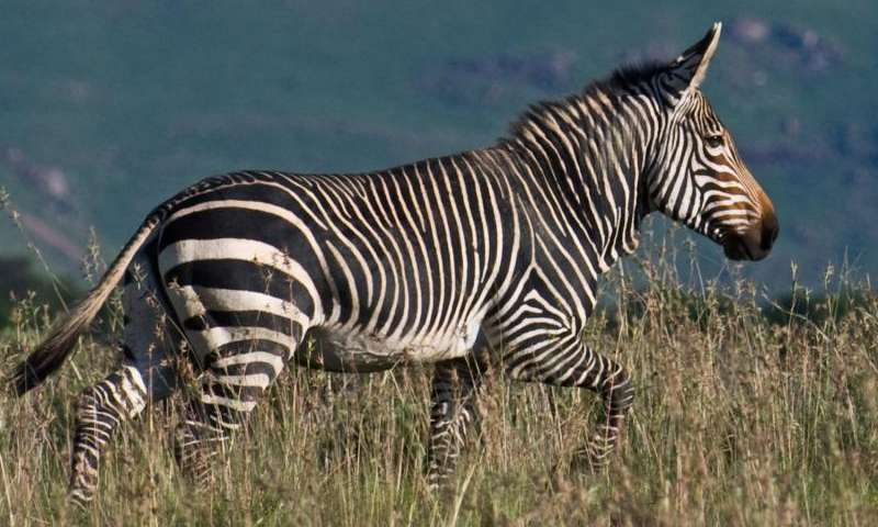 Global decline of large herbivores may lead to an 'empty landscape'