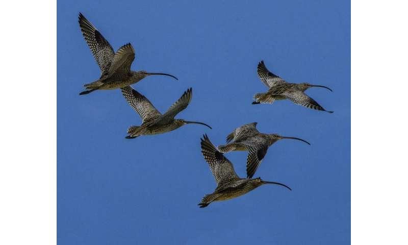 Global effort 'needed to save migratory birds'