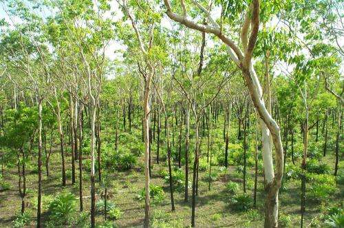 Good luck and the Chinese reverse global forest loss