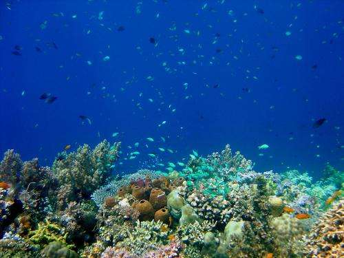 Good news and bad news for coral reefs