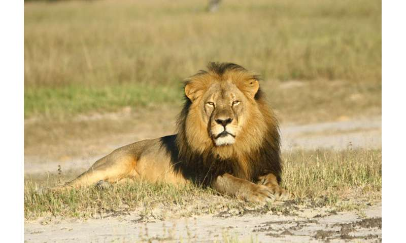 GPS transmitters can protect animals from poaching