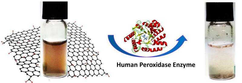 Graphene oxide biodegrades with help of human enzymes