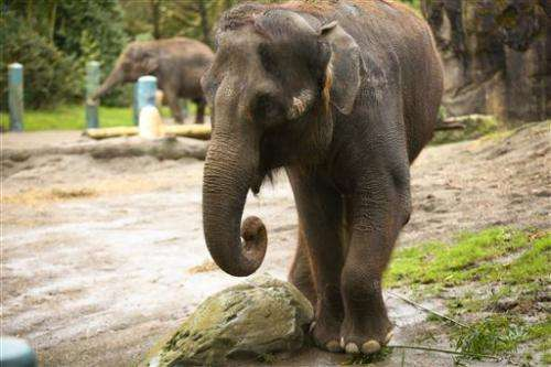 Group wants to stop elephants' move from one zoo to another