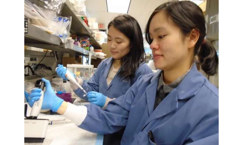 Gut immune system identified as a new and effective target in treating diabetes