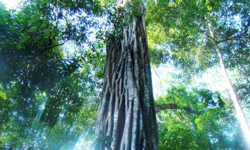Half of all Amazonian tree species may be globally threatened