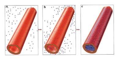 Halloysite: Finally a promising natural nanomaterial?