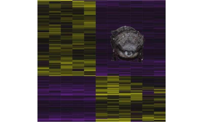 Hibernating bats mount a partial immune response against white nose fungus
