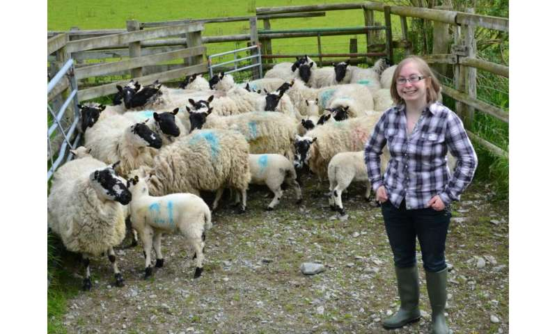 History of native Welsh sheep breeds uncovered