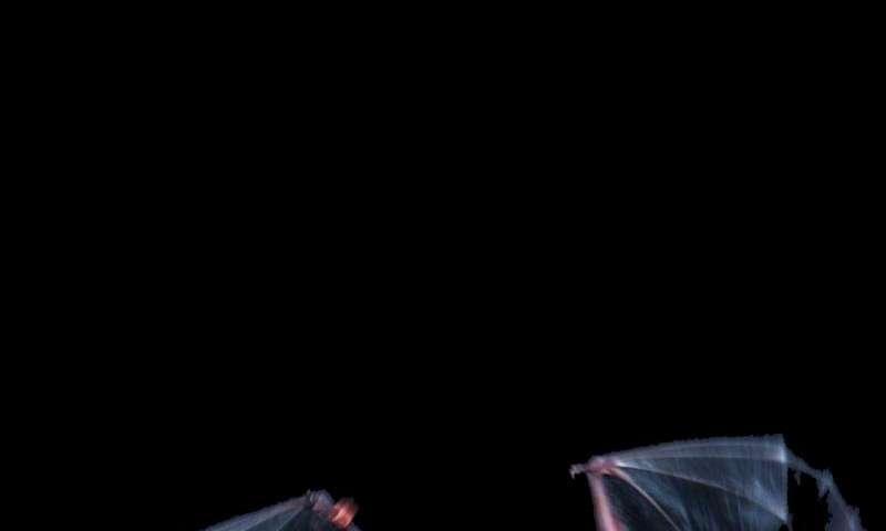 Holy agility! Keen sense of touch guides nimble bat flight
