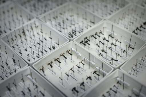 Hong Kong ant species are displayed at the Hong Kong University (HKU) in Hong Kong on August 6, 2015