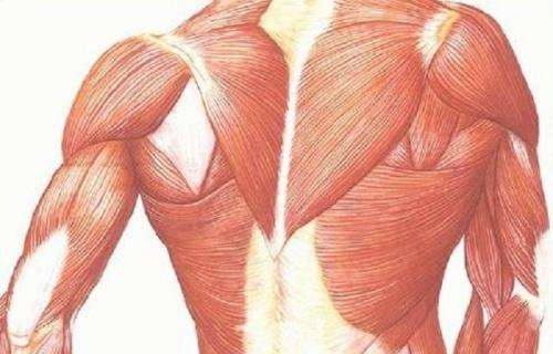 Hope for muscular dystrophy patients: Harnessing gene helps repair muscle damage