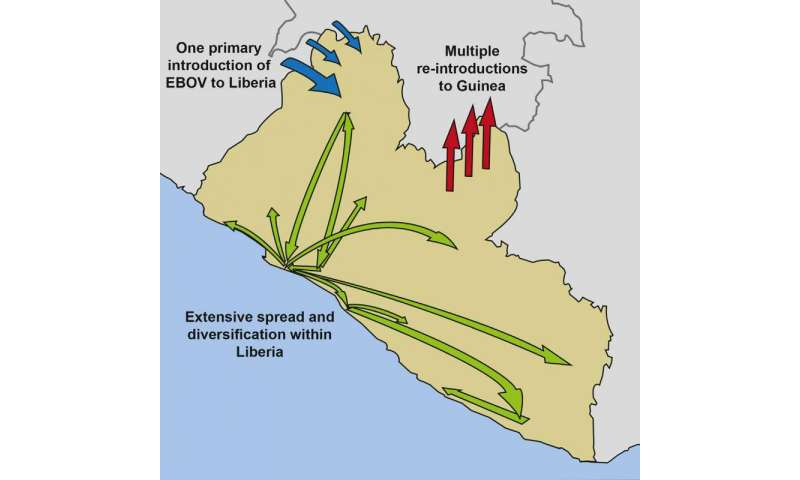 How Ebola spread in Western Africa, 2014-2015