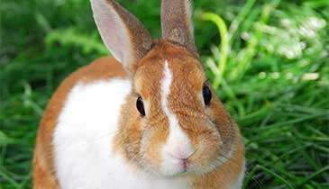 How happy and healthy is your rabbit?