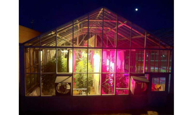 How Led Lighting Treatments Affect Greenhouse Tomato Quality