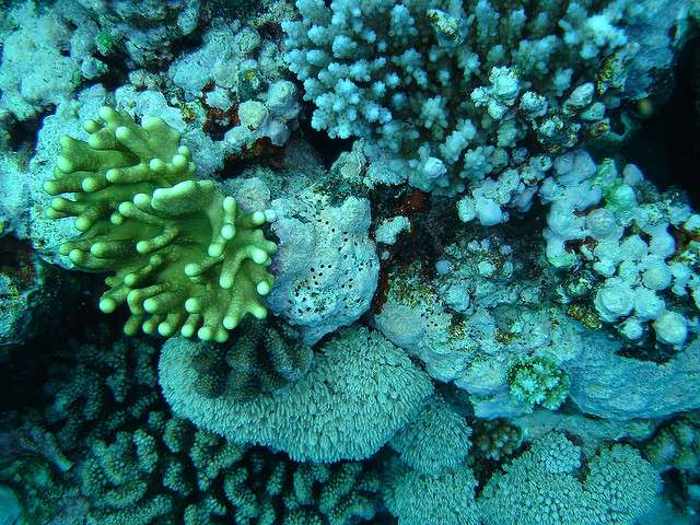 How much coral reef does the world have? A global perspective needed