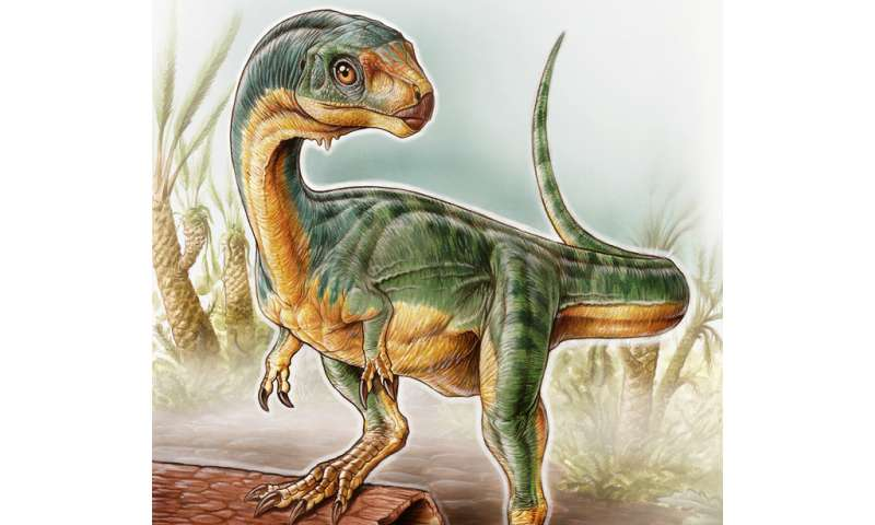 How we identified weird and wonderful 'Jurassic platypus' dinosaur