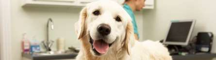 Human factors are main cause of errors in veterinary practice