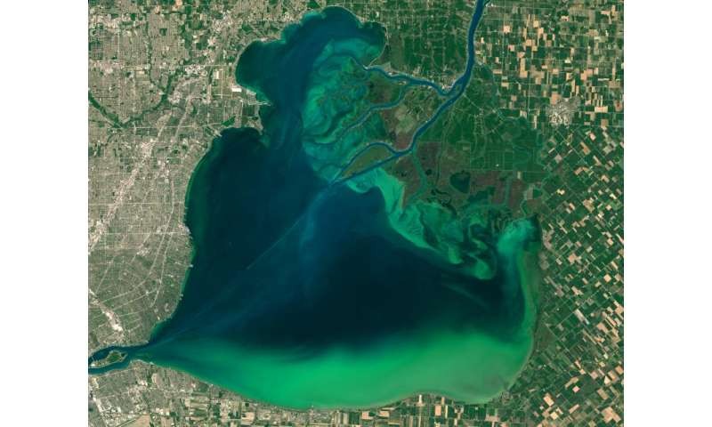 Image: Algae bloom in Lake St. Clair