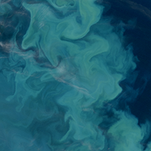 Increased carbon dioxide enhances plankton growth, opposite of what was expected