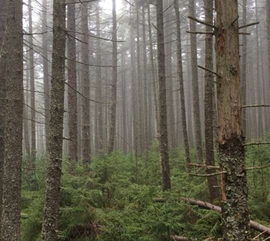 Increase in red spruce growth tied to the Clean Air Act