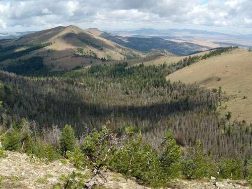 Increasingly severe disturbances weaken world's temperate forests