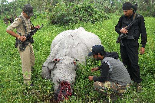 Indian forestry officials stand near the carcass of a one-horned rhinoceros which was killed and de-horned by poachers in the Ko