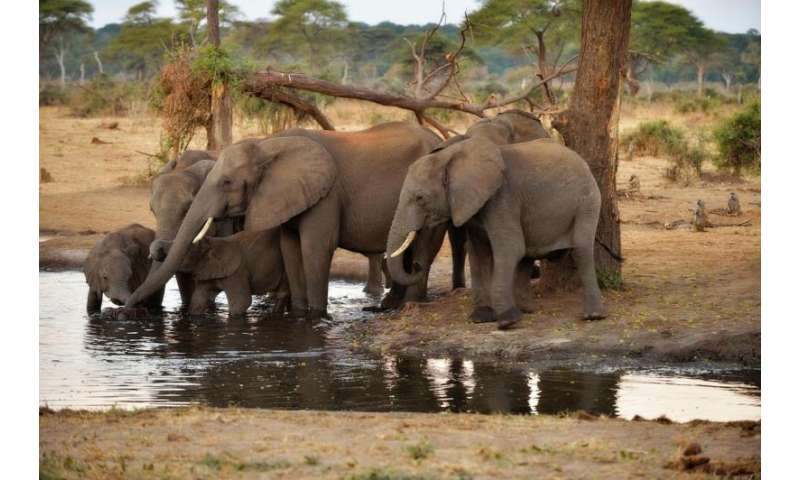 In dryland African regions, limiting wildlife water access can reduce water quality