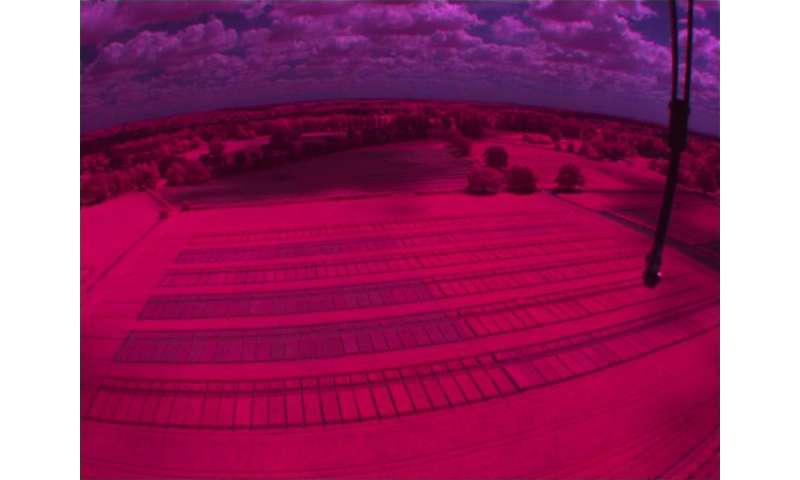 Infrared view of the field trial plots